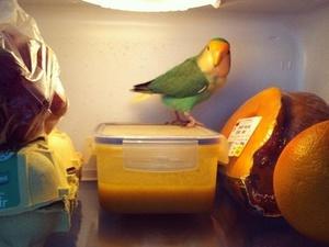 Désormais Youyou veille sur mes repas !
