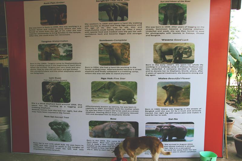 Les éléphants de la Fondation.