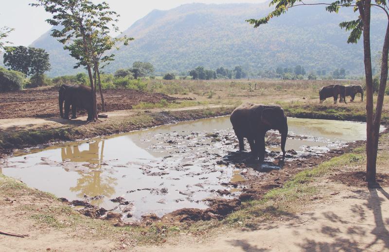 J'ai testé : le volontariat chez les éléphants en Thailande !