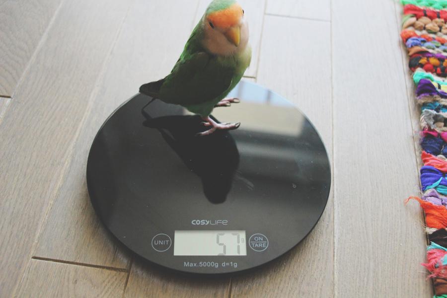Je tue mon perroquet...