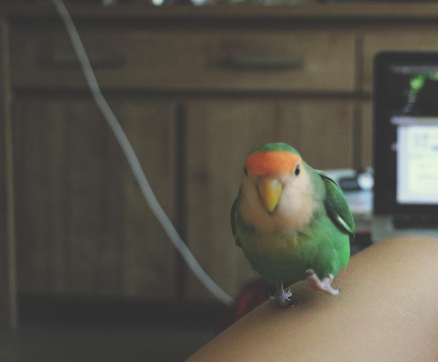 Je tuais mon perroquet