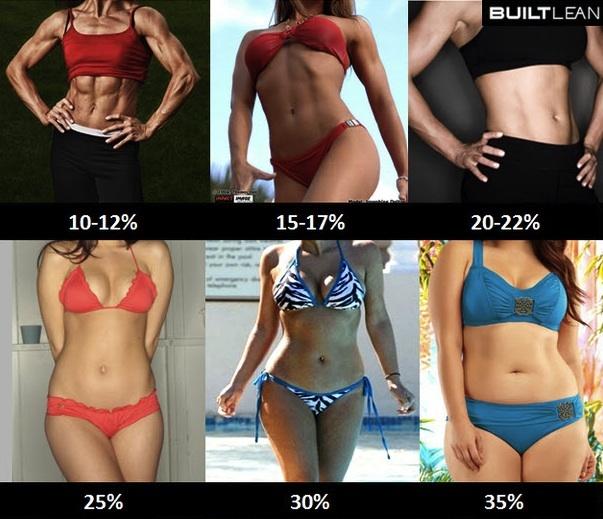Pourcentage de la masse graisseuse dans le corps