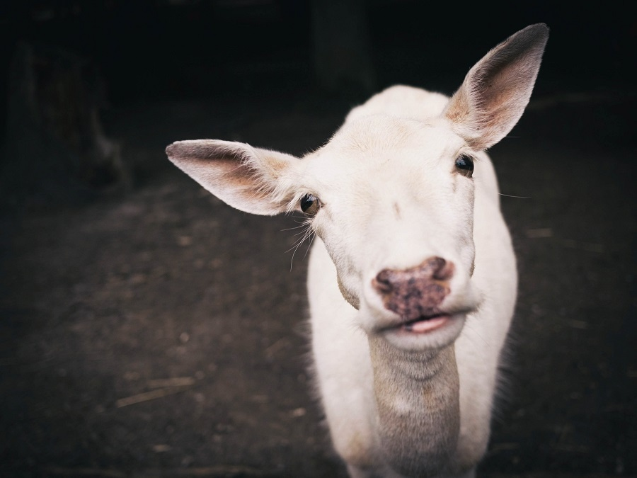 Les vegans sont-ils cons ?